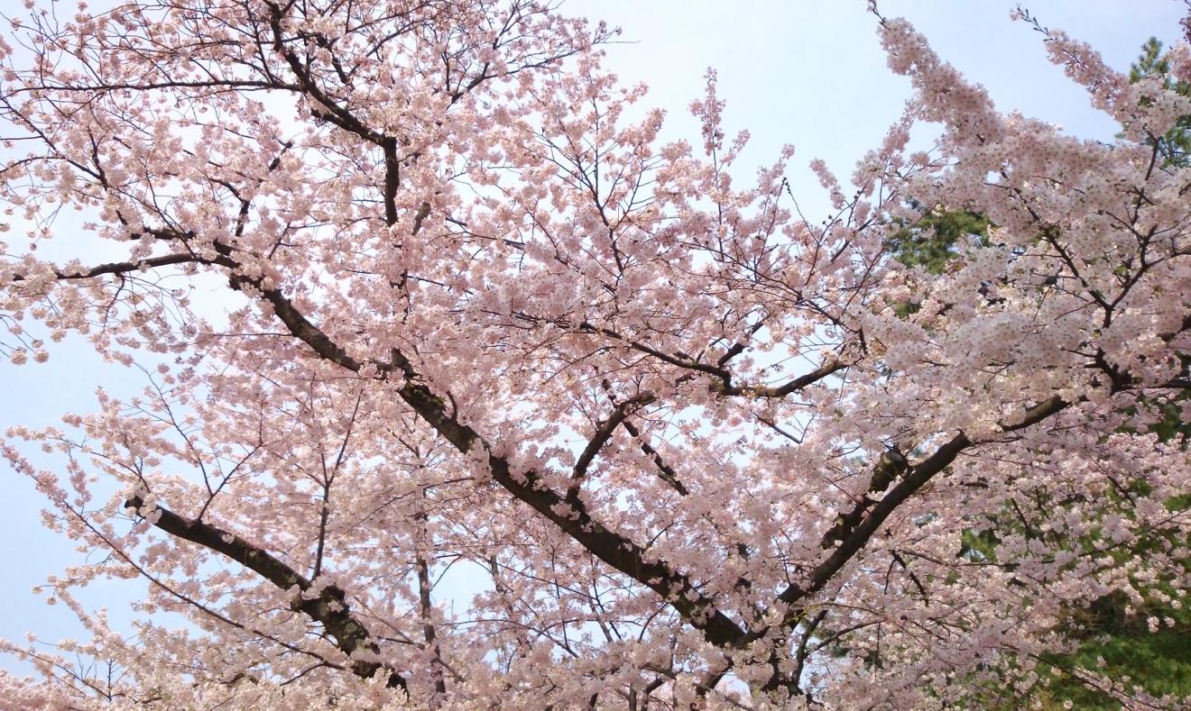 春の新生活応援プラン (朝食なし)